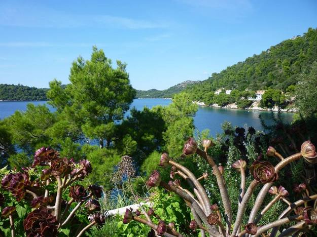 Succulents line this waterfront road on Lastovo.